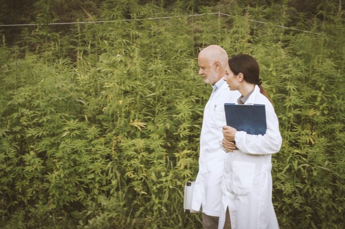 scientists walking in field of cannabis