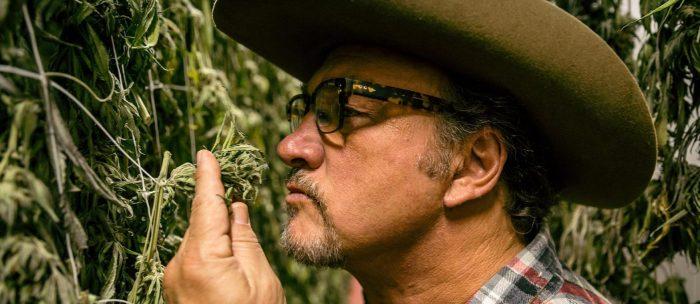 jim belushi smelling cannabis