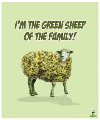 Green sheep of the family shirt