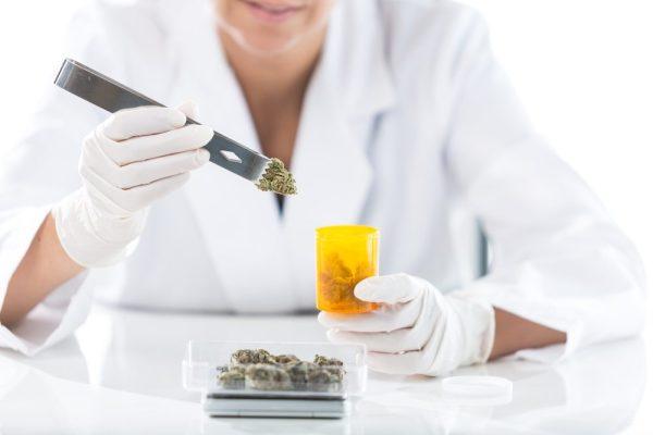 cannabis pharmacist putting bud in jar