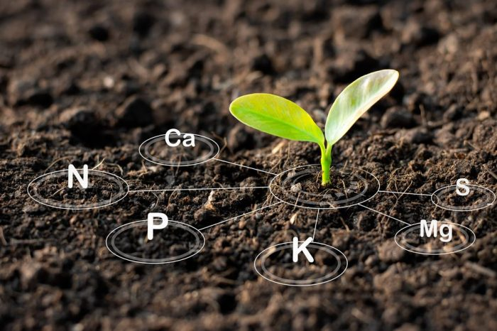 flushing plants involves leaving out the nutrients superimposed onto this picture of a seedling