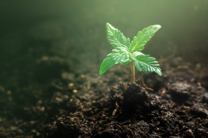 do plants feel pain is a question you mgiht think of looking at this cannabis seedling