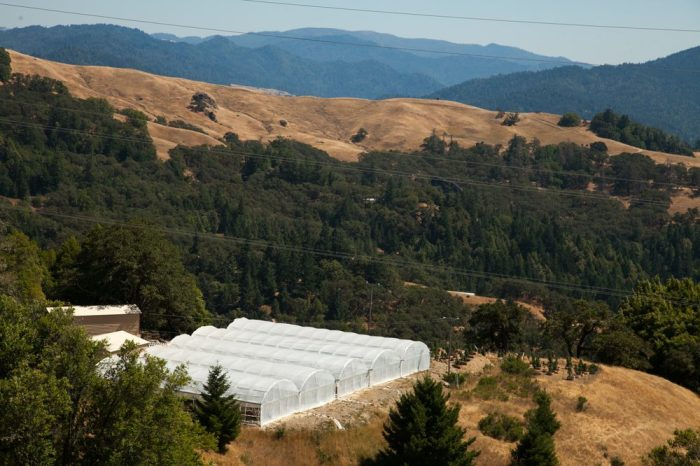 industrial hemp growing in grow tents