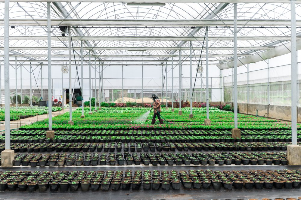 water security could be a concern for this large grow operation