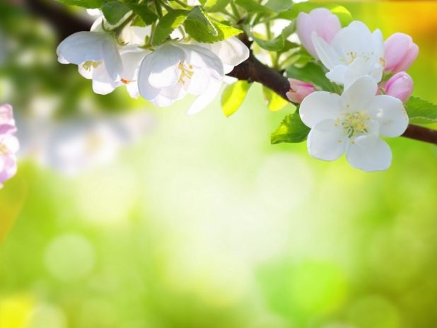 Spring flowers wallpaper backgrounds allofthepicts 10 most por spring flower wallpaper backgrounds full hd 1920 mightylinksfo