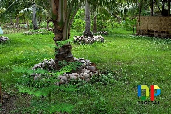 Buhian Diversified Farm 3