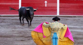 Korida, býčí zápasy – co jste možná nevěděli