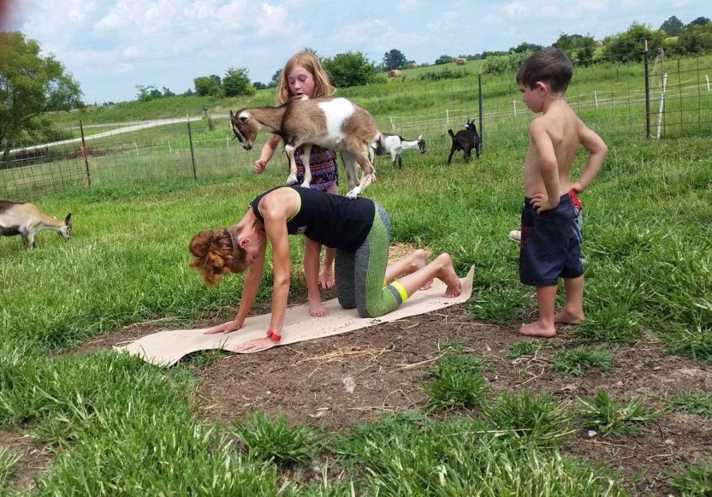 Goat yoga balance