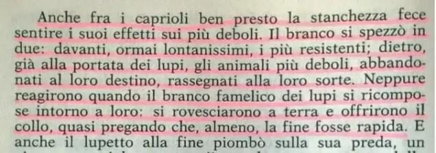 Gianni Padoan - Il Branco Della Rosa Canina - pag. 98