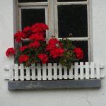 スイス 建物の窓辺に咲き誇るお花はゼラニウムやペチュニア