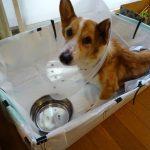 1000円以下で作れる中型犬介護ベットの作り方