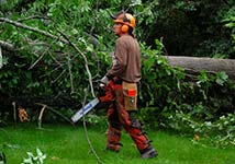 Photo of an arborist at the 2017 work retreat