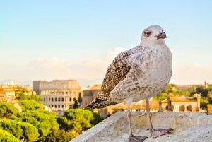Widok z Palatynu na Koloseum