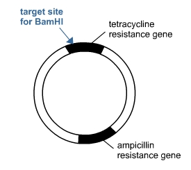 Transferring the Gene | S-cool, the revision website