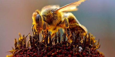 Médico encontra quatro abelhas vivas em olho de mulher