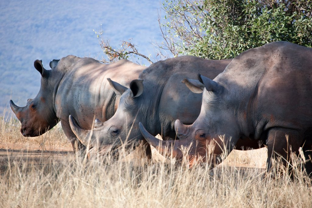 South Africa Animals - Wildlife in South Africa (6)