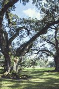 Oak Alley Plantation, Vacherie