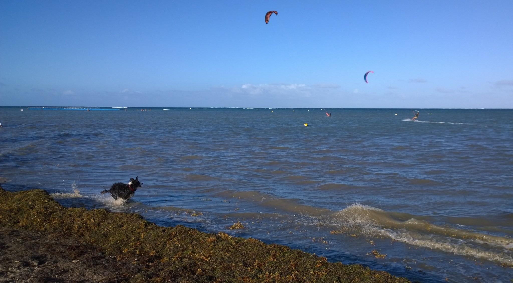 Mustavalkoinen salama veteli melkoista lenkkiä rannalla ees takaisin, kun omistaja paineli laudalla taivaanrannassa.