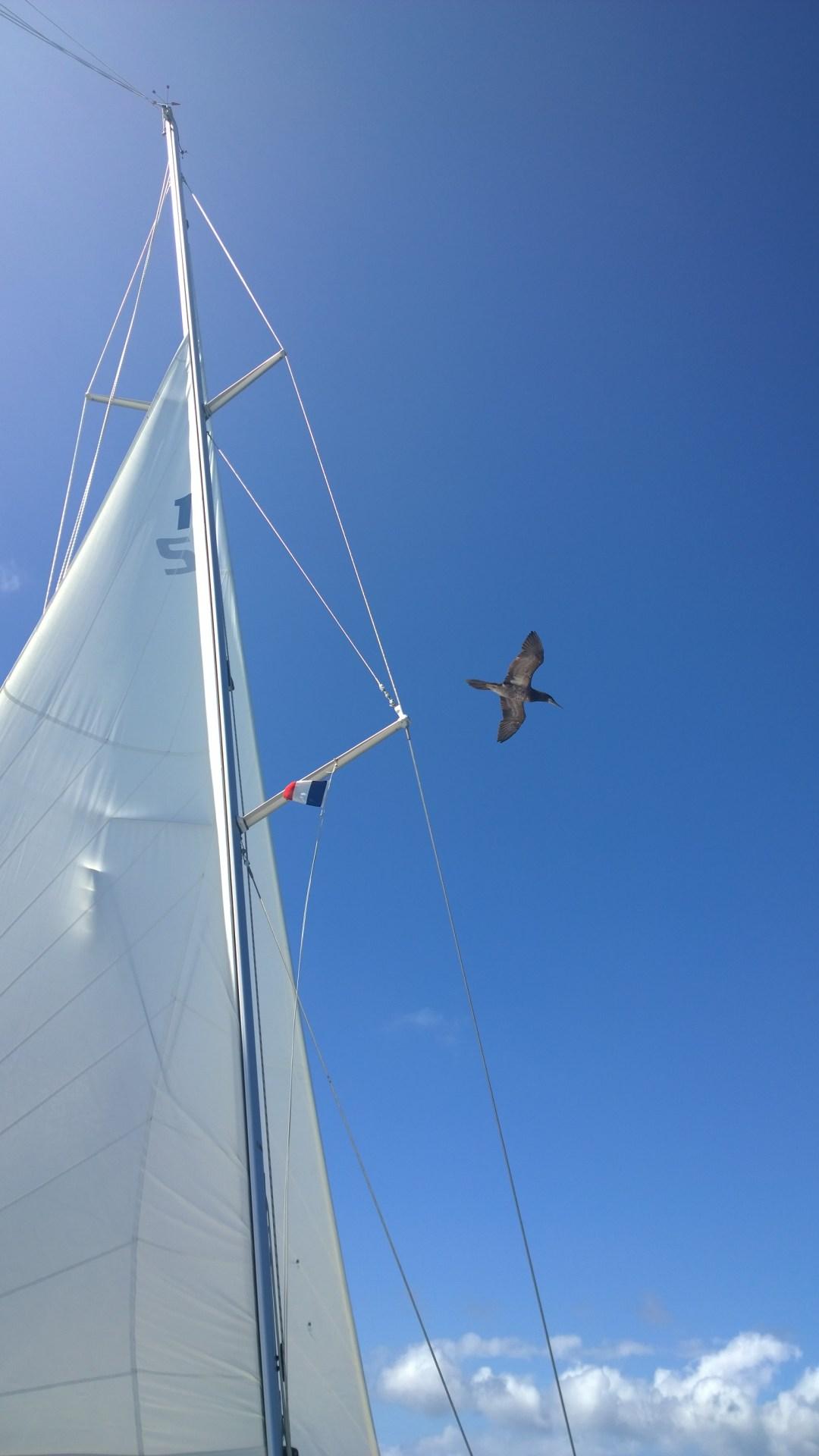 Nyt vähän korkeammalla. Välillä lintu lensi oikeasti reilusti alle kahden metrin päästä minua. Lumiani ei ehtinyt niihin hetkiin mukaan.