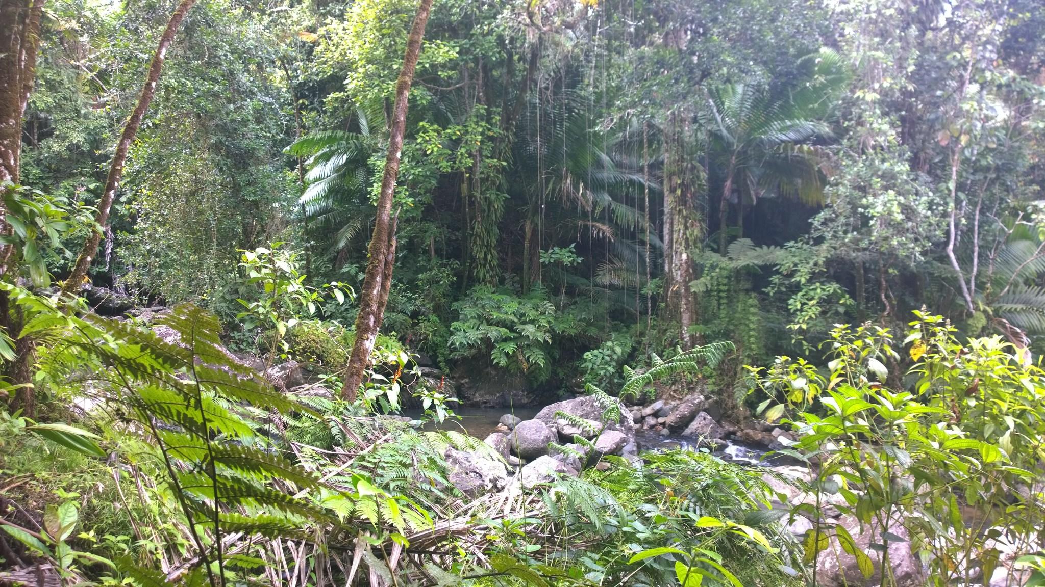 Kasvillisuus oli uskomattoman runsasta! Outoa sen sijaan oli se, että metsässä oli lähes täysin hiljaista. Ei lintujen laulua, öttiäisten siritystä tai muuta. Ei edes moskiittoja! Vain vihreyttä.