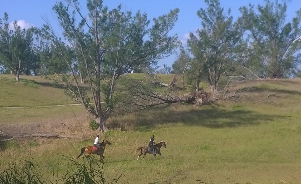 Oiii! Näytti mahtavalta, kun hevoset painelivat golf-kentällä...