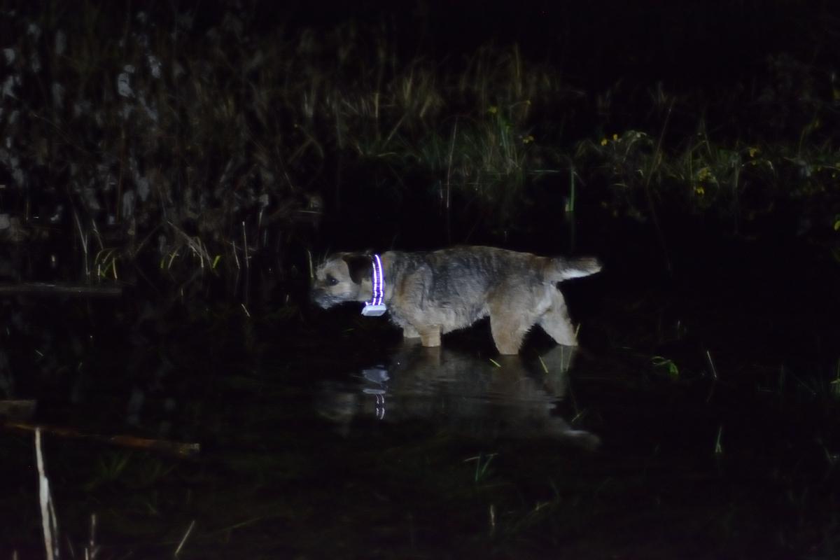 Vesi nousi vähän kuopassa olevalle takapihallemme, jota Pipo käytti kahlailuun...