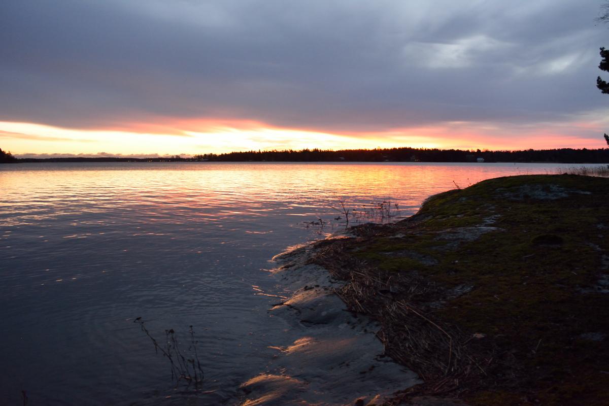 Aamulla vesi oli jo laskenut. Korkeuseron näkee veden rannalle tuomista kaisloista.