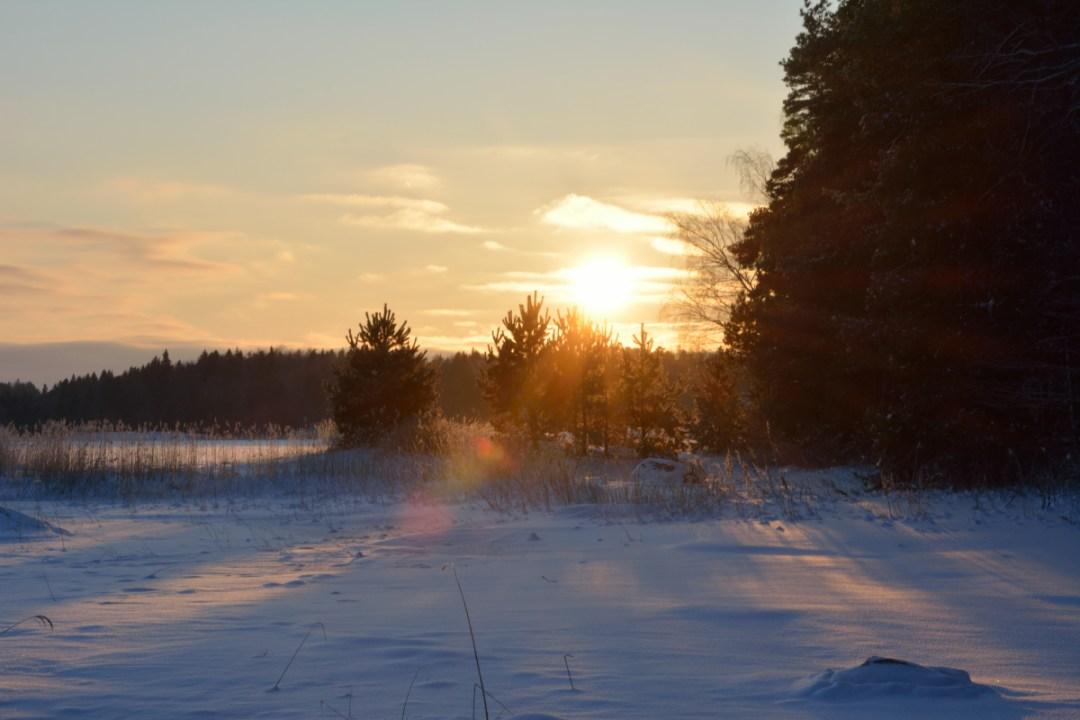 Aurinko pilkahtaa kuusien välistä saaren takaa.