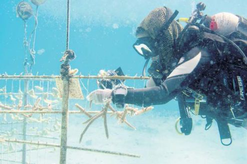 Work on restoring the coral reefs.