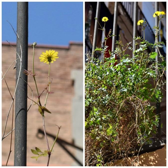 foto flores