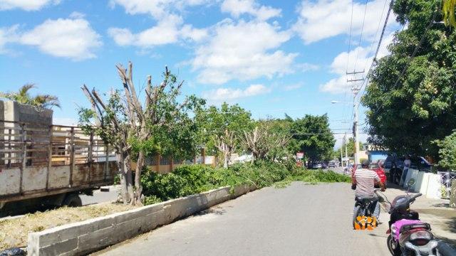 Corte árboles Sánchez