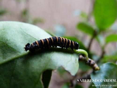 borboletas_00 (1)