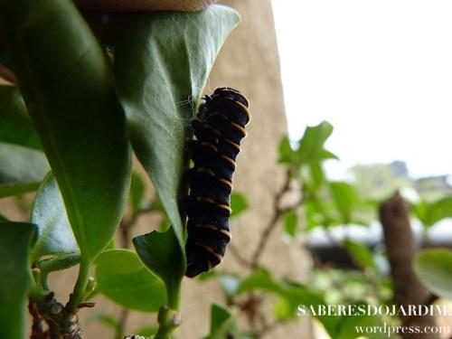 borboletas_03 (1)