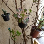 Árvore de Mini Vasinhos