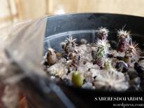 Cactos - Como Plantar