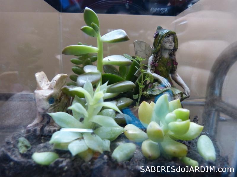 Fadas e Mini Jardins - Suculentas