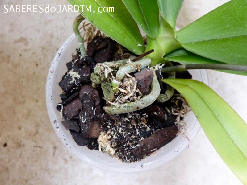 Substrato para Orquídea