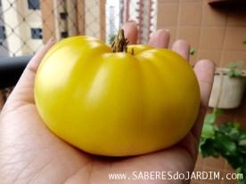 Tomate White Beefsteak