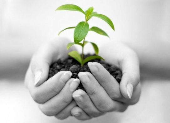 Não tenha medo, tirem suas ideias do papel, vivam seus sonhos, plantem as sementes de uma vida nova, elas estão nas suas mãos.