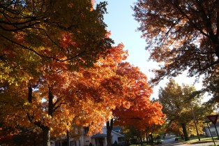 Fall Color.7225