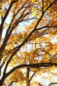 Fall Color.7245