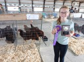 Addyson Farwell receives a Grand Champion ribbon for her Pen of 3 in the production class at the Nemaha County Fair.
