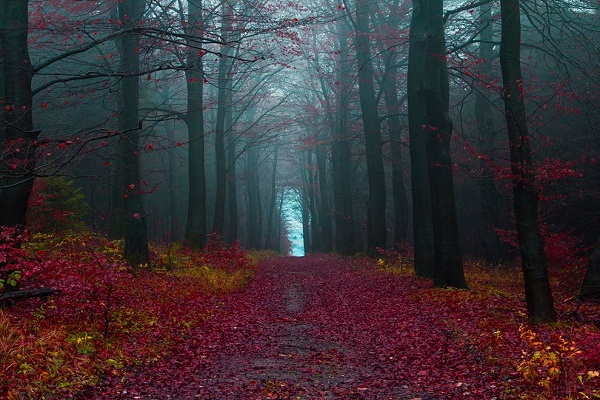 Visit the Black Forest of Germany