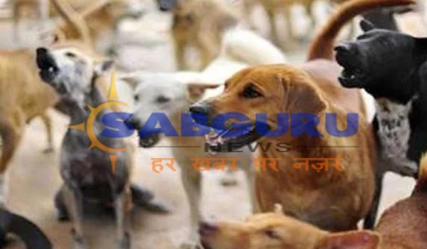 Six years old innocent killed by street dogs in Saharanpur