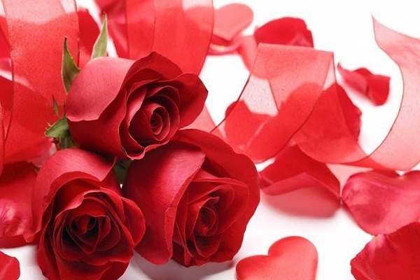 Happy rose day 2019 different colors roses its meaning