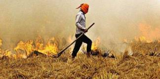 105 farmers fined more than Rs 1.5 lakh for burning stubble