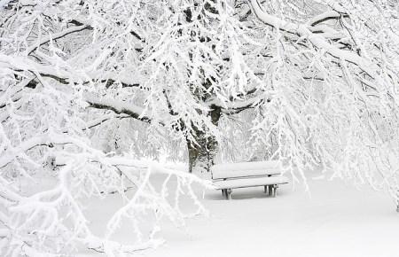Symbolbild verschneiter Wald für den Adventsblogbeitrag