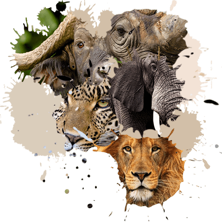 sabi-sands-homepage-big-5