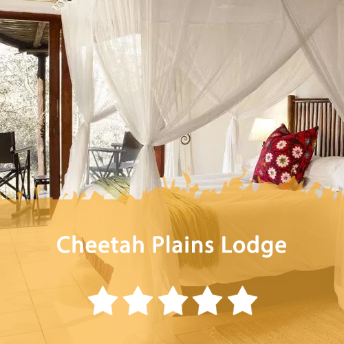 Cheetah Plains Lodge Featured Image