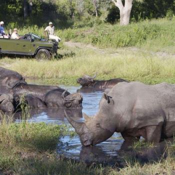 Elephant Plains Game Lodge Accommodation Activities Safari Drives